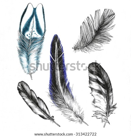 Set of drawings feathers - stock photo