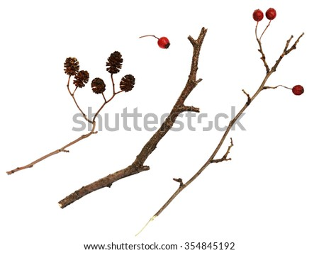 Set of dry twigs  with berries and cones isolated on white - stock photo