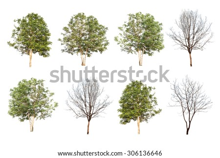 set of eight green trees and dead trees isolated on white background - stock photo