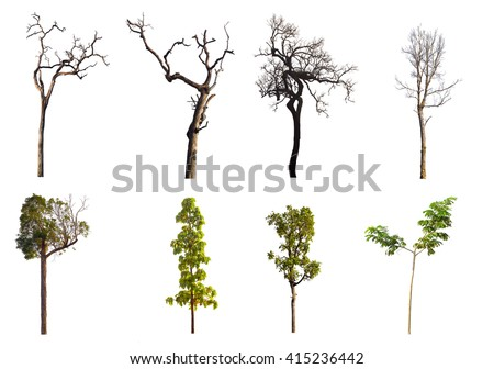 set of eight green trees and dead trees isolated on white background. - stock photo