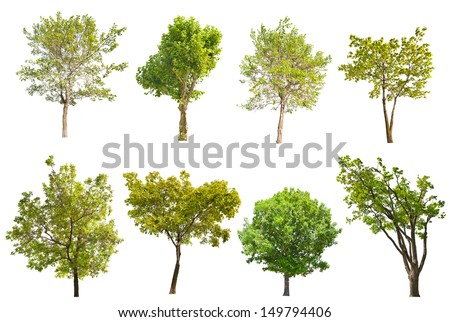 set of eight green trees isolated on white background - stock photo