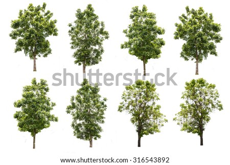 set of eight green trees isolated on white background with clipping path - stock photo