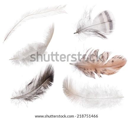 set of feathers isolated on white background - stock photo