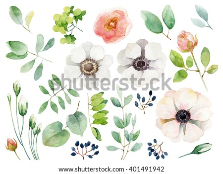Set of floral elements isolated on white background. Watercolor illustration - stock photo