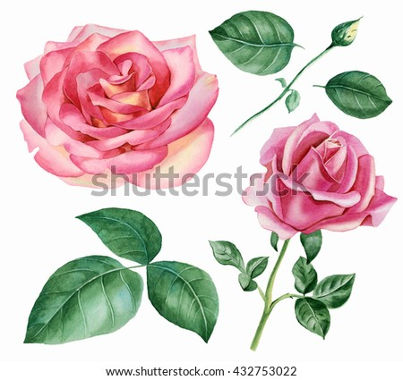 Set of floral elements. Rose Bud, blooming roses, leaves of roses. - stock photo