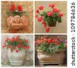 set of flowering red plants in rustic containers, Tuscany, Italy, Europe - stock photo
