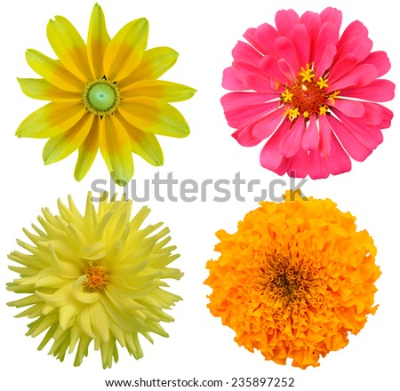 Set of flowers in different shapes, America blooming