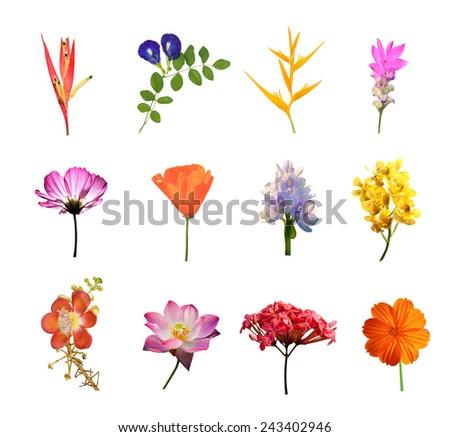 set of flowers isolated on white background - stock photo