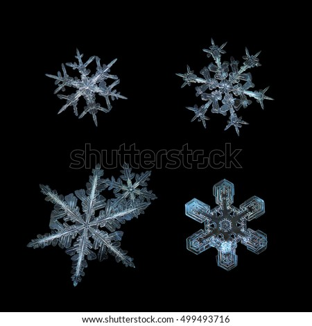 Set of four snowflakes, isolated on black background. This collage made from macro photos of real snow crystals: large stellar dendrites with complex inner structure and ornate arms.