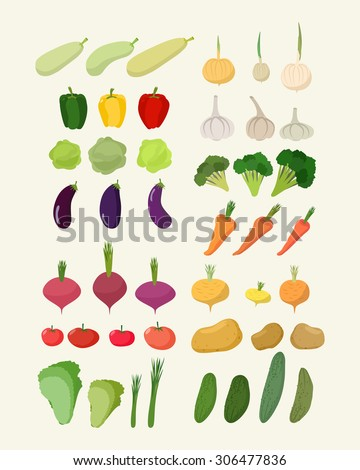 Set of fresh vegetables. Illustration Isolated carrot and garlic