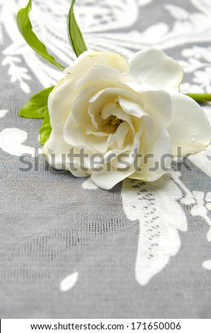 Set of gardenia lying down with lace texture