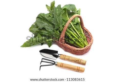 Set of gardening tools and fresh spinach in basket on  white background
