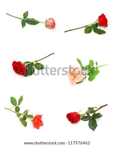 Set of gift rose branches on white table