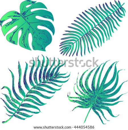 Set of graphic illustration of tropical palm leaves isolated on white background. Colorful illustration - stock photo