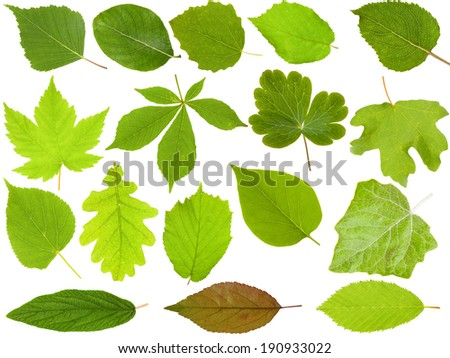 Set of Green Leaves isolated on white background - stock photo