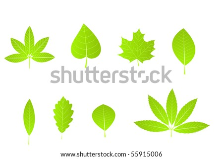 Set of green leaves isolated over white background. Vector Illustration