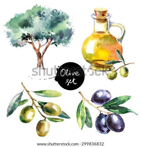 Set of hand drawn colorful watercolor olive painting isolated on white background. Illustration of fruit olives, olive tree, olive oil - stock photo