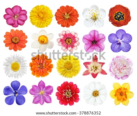 Set of heads of the flowers isolated on the white - stock photo