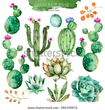 Set of high quality hand painted watercolor elements for your design with succulent plants,cactus and more.Perfect for your project,wedding,greeting card,photos,blogs,wreaths,pattern and more - stock photo