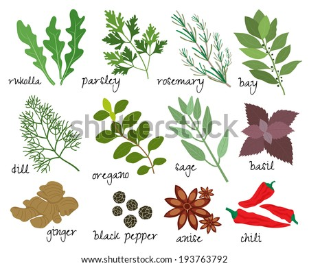 Set of illustrations of herbs and spices with sprigs of fresh rosemary  rocket  parsley  bay leaves  dill  oregano  sage  basil  root ginger  black peppercorns  anise and red hot chillies - stock photo