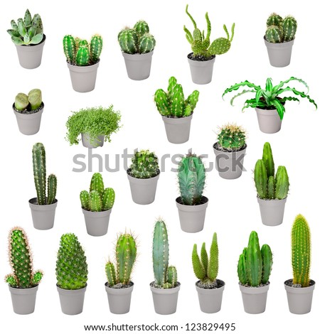 set indoor plants pots cacti other stock photo 123829495 shutterstock. Black Bedroom Furniture Sets. Home Design Ideas