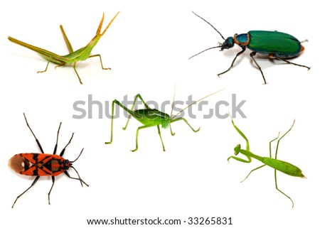 Set of insect isolated on white background - stock photo