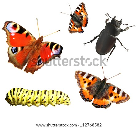 Set of insects. Isolated over white - stock photo