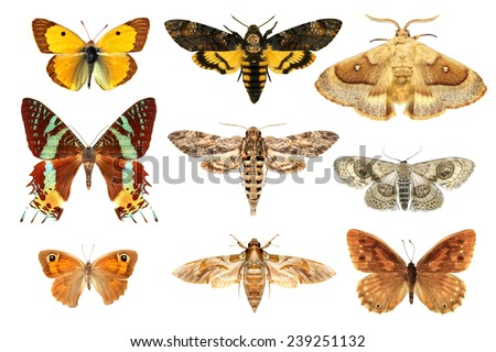 Set of insects on a white background - stock photo