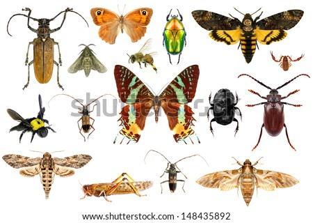 Set of insects on white background - stock photo