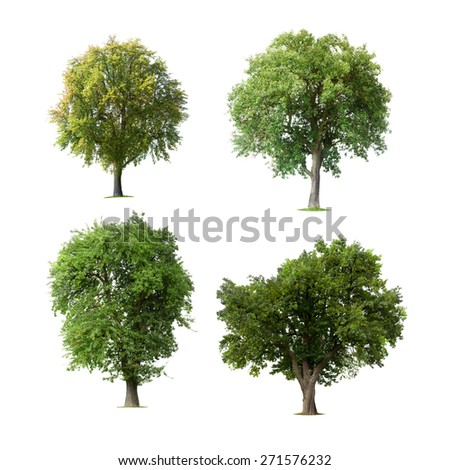 Set of isolated trees - stock photo
