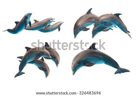 set of jumping bottlenose dolphins isolated on white background - stock photo