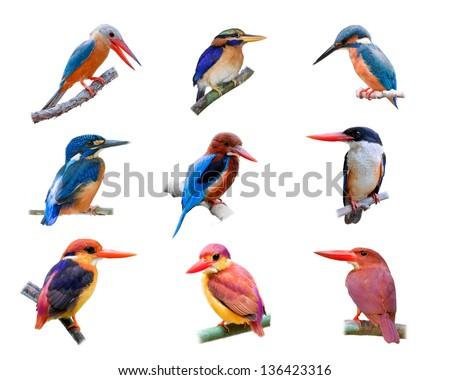 Set of Kingfisher isolated on white background. - stock photo