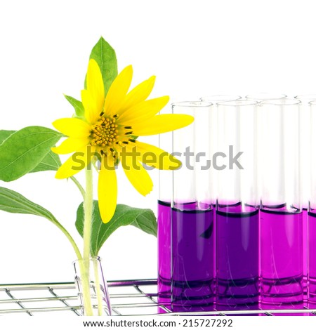 Set of laboratory equipment with chemical solutions and young sunflower on white background - stock photo