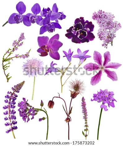 set of lilac color flowers isolated on white background - stock photo