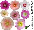 Set of  mallow flowers on white background - stock photo