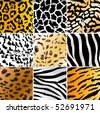 Set of nine different wild animals skin patterns - stock photo
