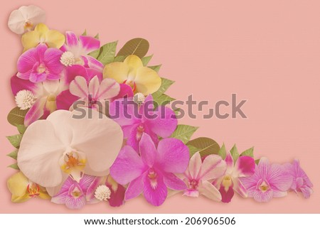 Set of Orchid Flower Background