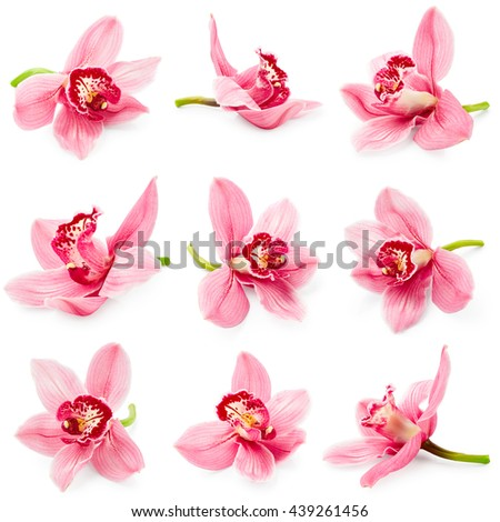 Set of orchid flower isolated on white background - stock photo