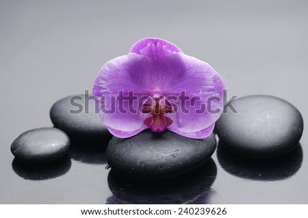 Set of orchid on black stones - stock photo