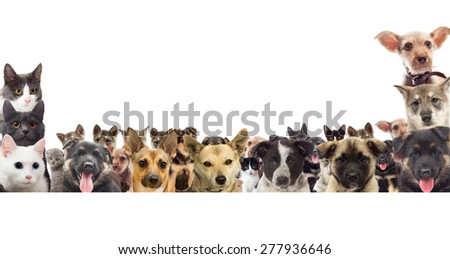 set of pet watching - stock photo