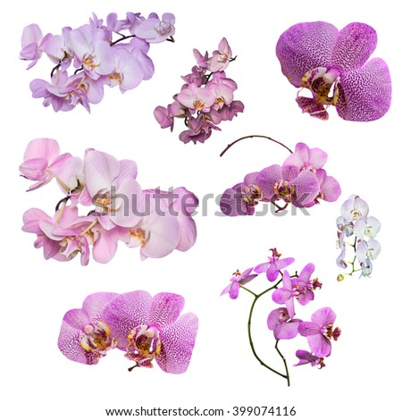 Set of Phalaenopsis orchid flowers isolated on white background. Phalaenopsis orchid flower is like a tropical butterfly. - stock photo