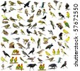 Set of 81 photographs of birds isolated on white background  - stock photo