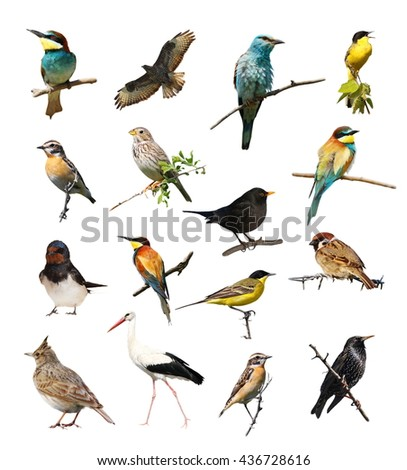 Set of photographs of birds isolated on white background, texture