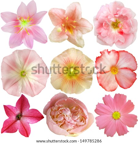 Set of Pink Flowers Isolated on White  - stock photo