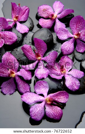Set of pink orchid with stones - stock photo