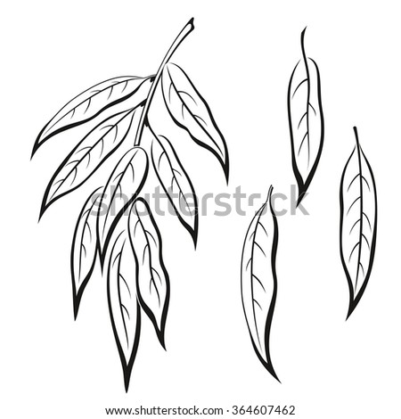 Set of Plant Pictograms, Willow Tree Leaves, Black on White.  - stock photo