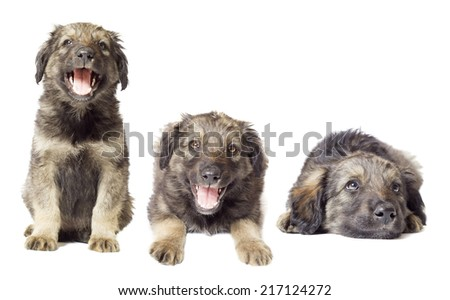 set of puppies
