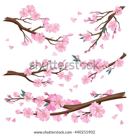 Set of realistic sakura japan cherry branch with blooming flowers. Nature background with blossom branch of pink sakura flowers. Template isolated on white background.  illustration - stock photo