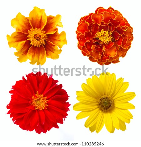 set of red and yellow flowers on white background - stock photo