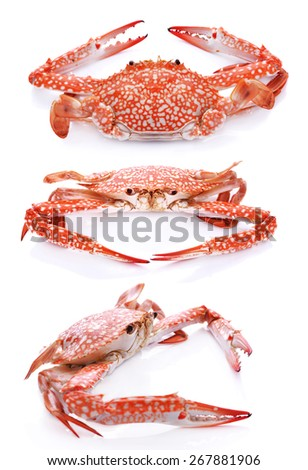 Set of Red crab isolated on white background - stock photo